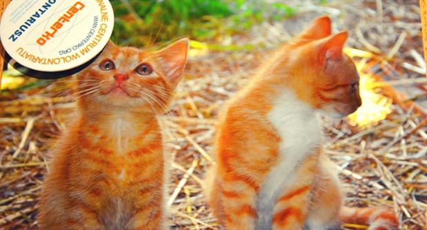 """Warsztat """"Pierwsze koty za płoty"""""""