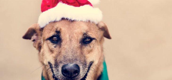 Świąteczna paczka dla psiaczka